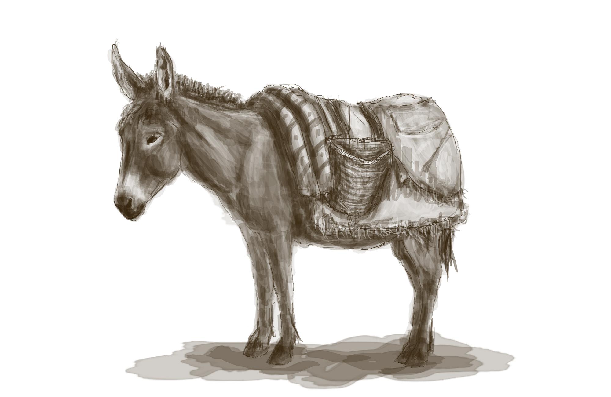 Vier Pferde und ein … Esel